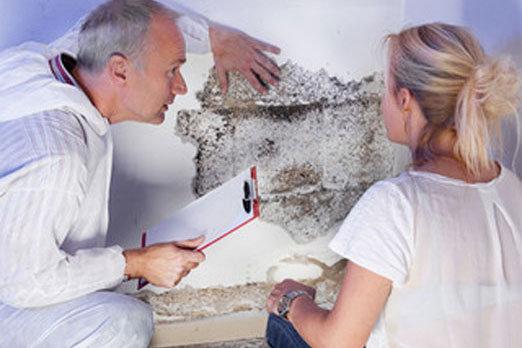 Schimmel durch Feuchtigkeit auf Mauerwerk - Sachverständige beraten