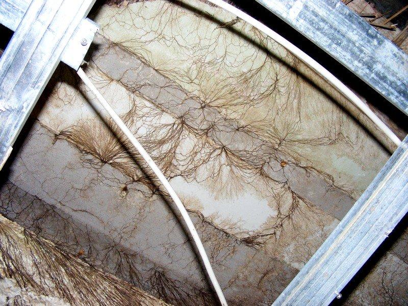Braunfäule hinter abgehängter Decke